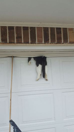 Cat Pinned At Top Of Closed Garage Door Rescued Without