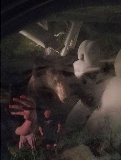 Bear Locks Itself In Virginia Resident S Car Honks Horn