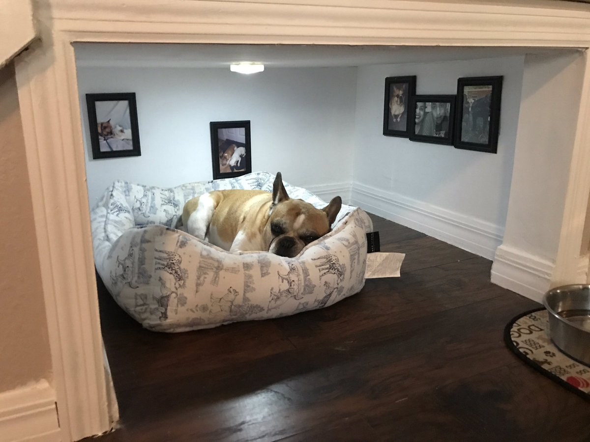 undefined - Flooring For Dog Room