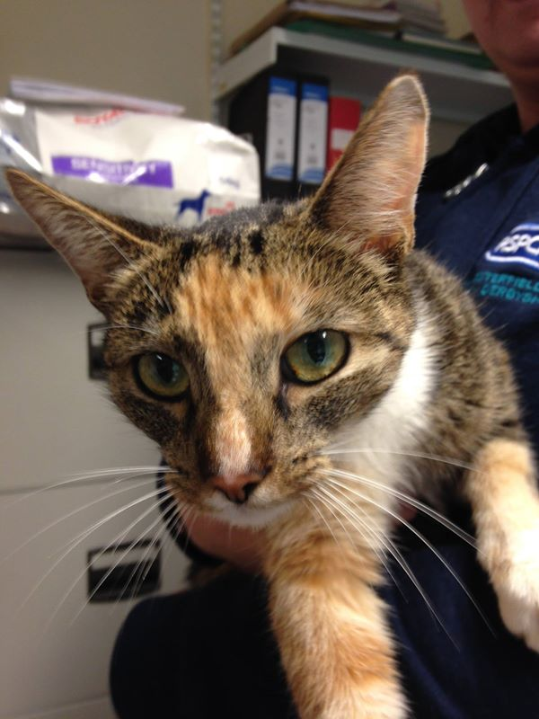 swedish cat missing for a year returned to owner in england cats