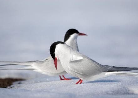 Incredible Arctic // Shutterstock