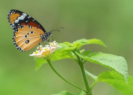 Hitesh Chhetri // Shutterstock