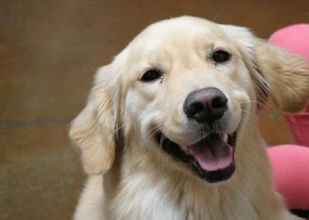 Mariposa Veterinary Wellness Center // Flickr
