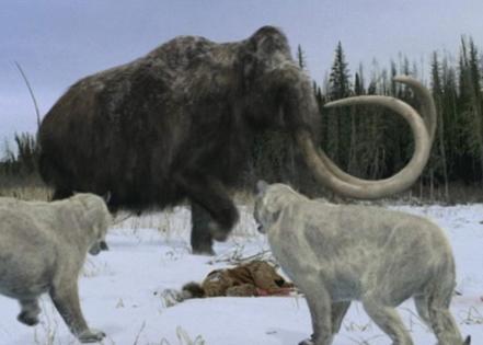 BBC Natural History Unit (NHU)
