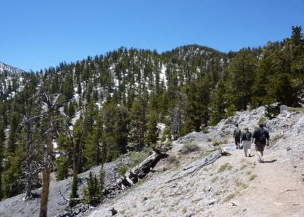 Trail Sherpa
