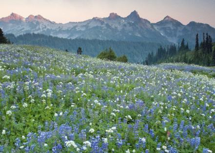Mount Rainier National Park // Flickr