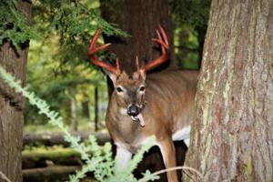 Great Smoky Mountains National Park/TNS